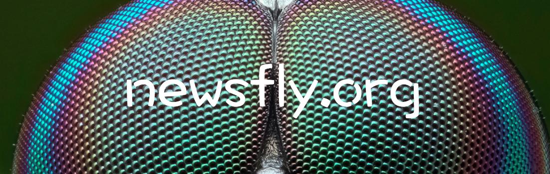 Newsfly.org